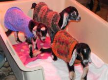 The Triplets, Violet, Daisy and Lilly